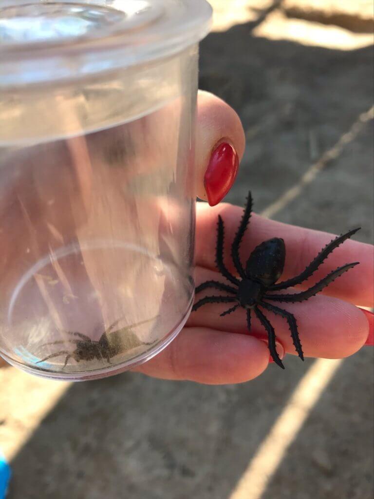 En hittad spindel i en glasburk och en plastspindel att jämföra med.